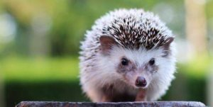 Top 10 Most Cutest Animals In The World 2019