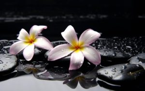 Plumeria Beautiful Flower