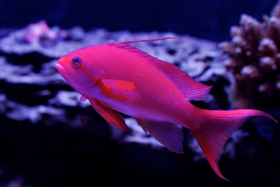 Top 10 Beautiful Fishes In The World