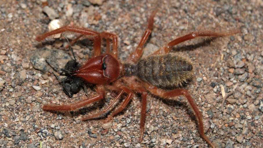Top 15 Biggest Spiders In The World