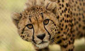 Top 10 Fastest Animals In The Word
