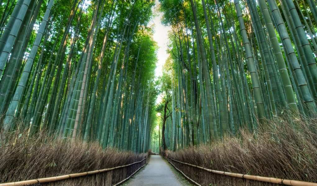 Top 10 Most Beautiful Forest In The World