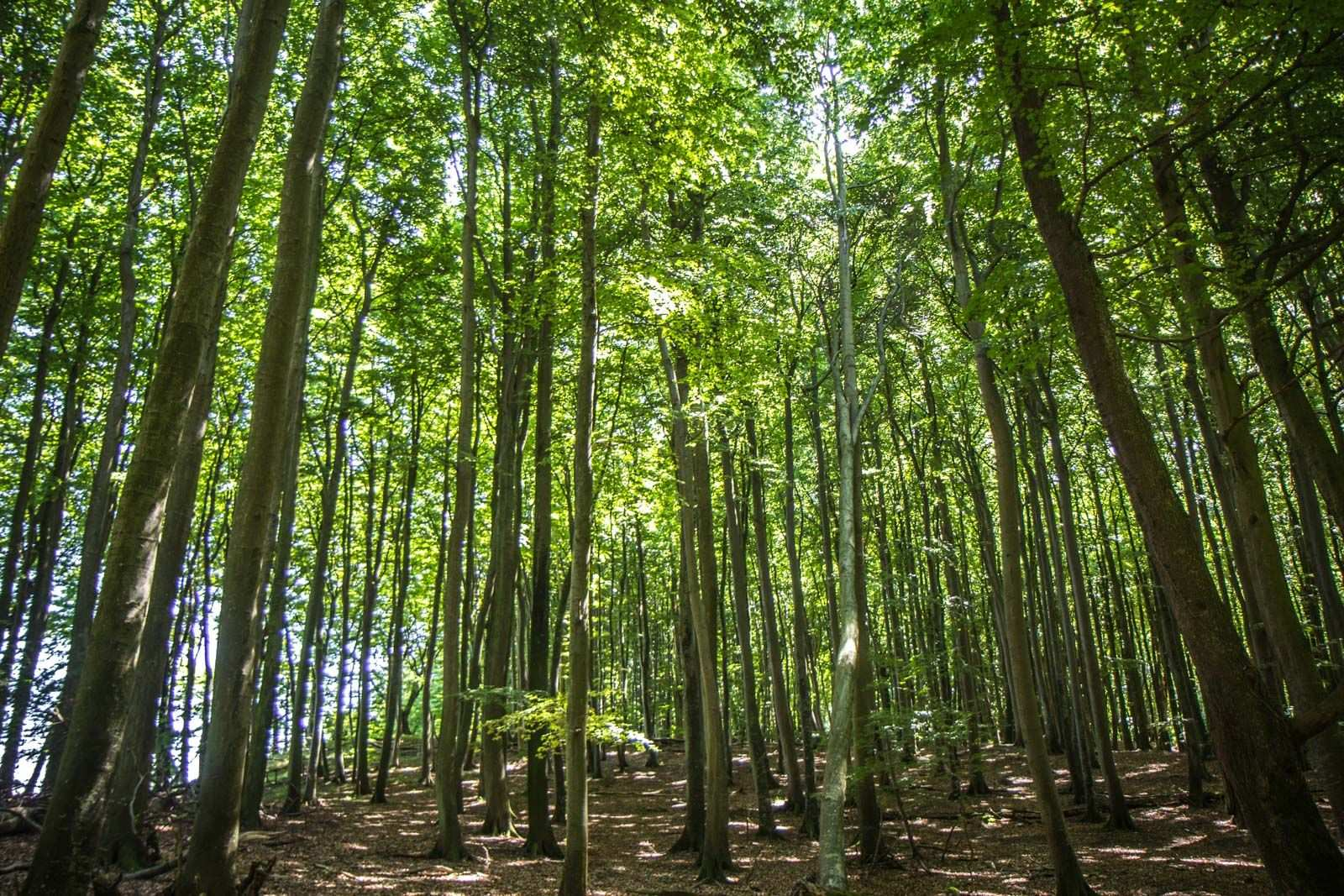Top 10 Most Beautiful Forest