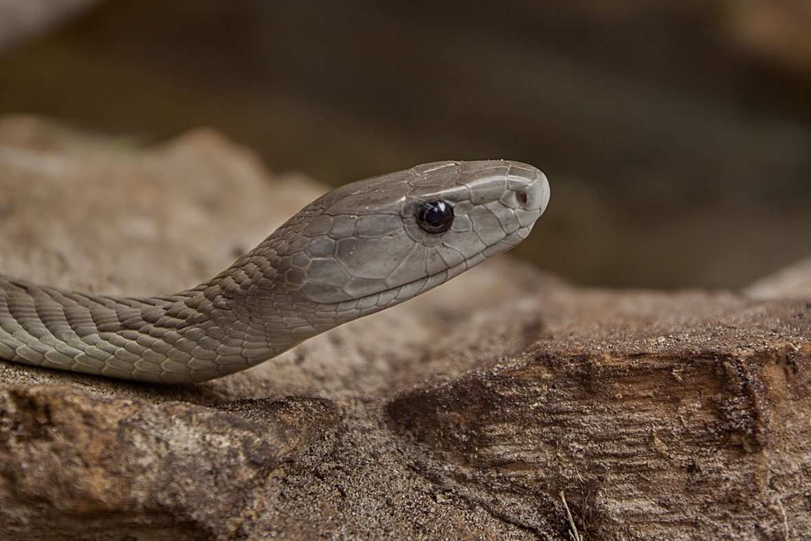Top 10 Coolest Snakes