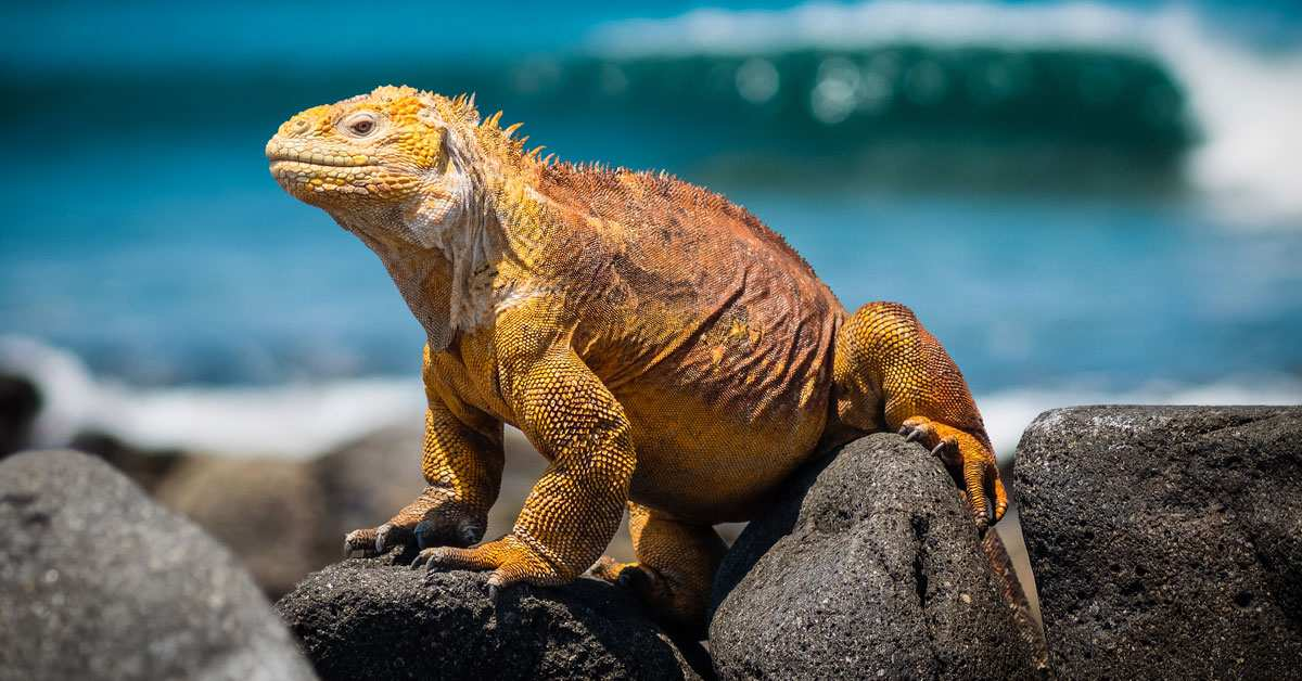 Top 10 Coolest Lizards In The World