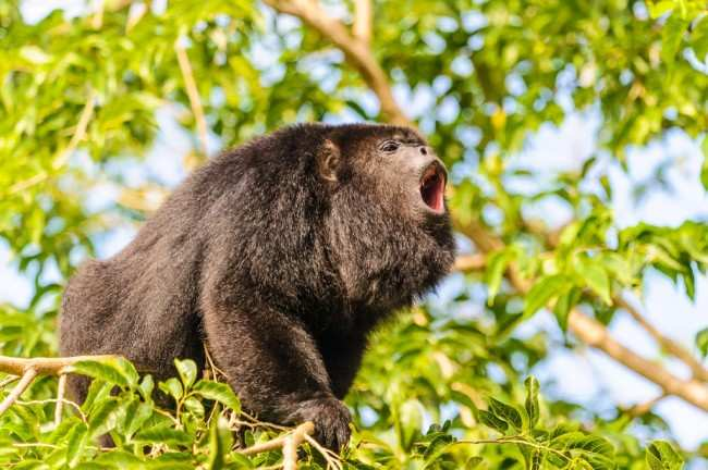 Top 10 Loudest Animals In The World