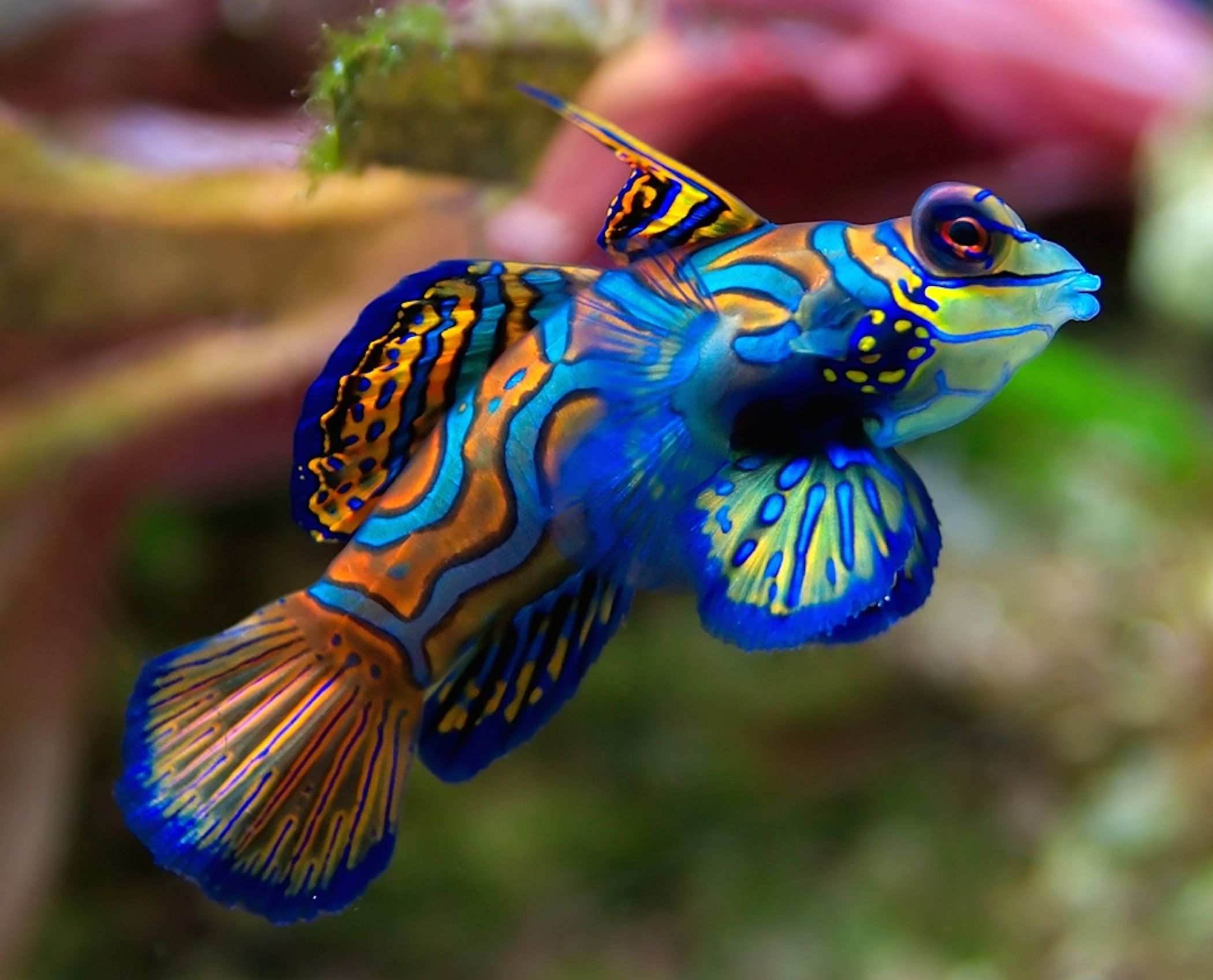 Top 10 Most Colorful Animals In The World