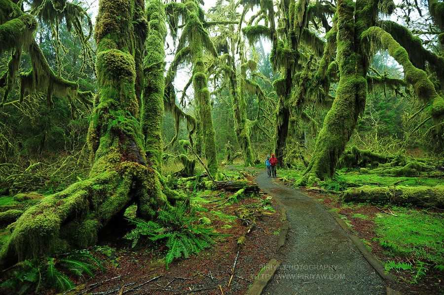 Most Beautiful Forest In The World