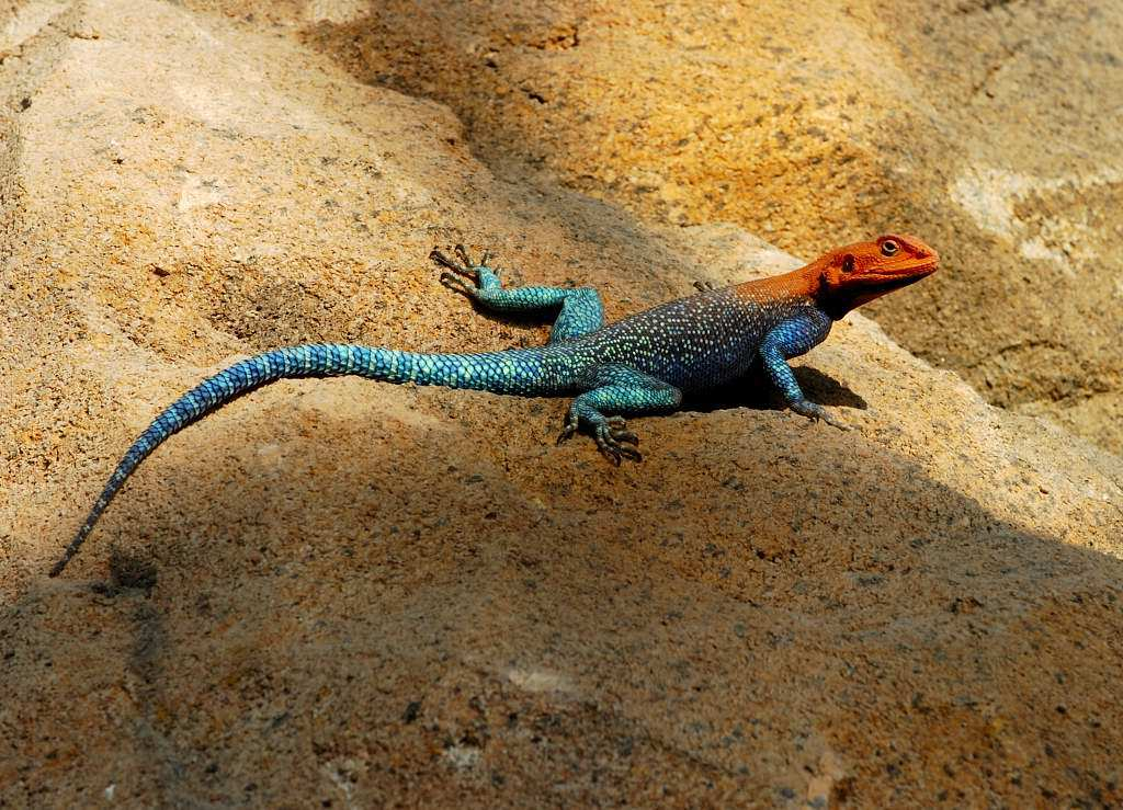 Coolest Lizards In The World