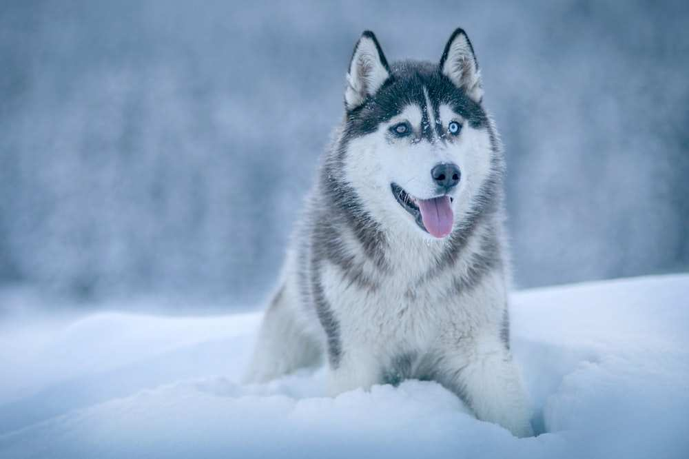 Top 10 Beautiful Animals In The World