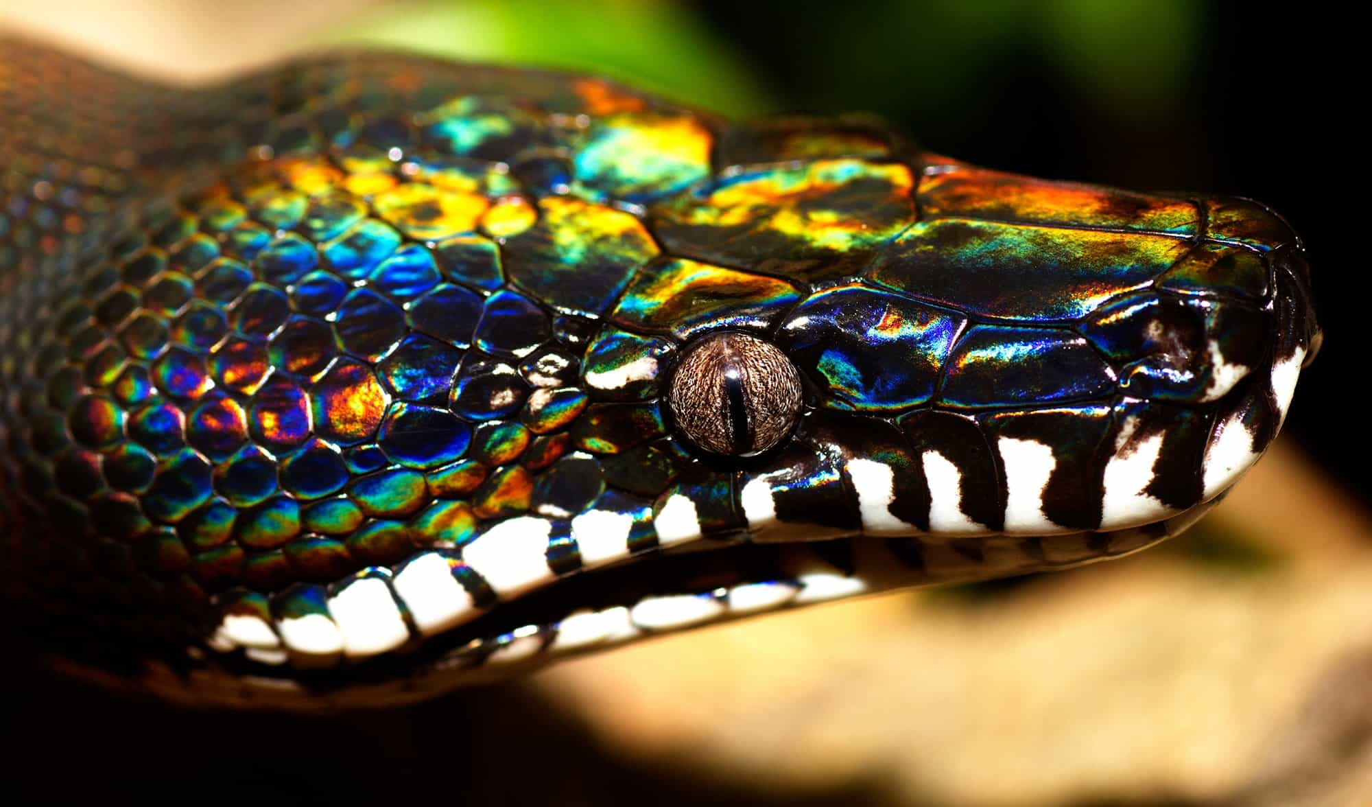 Top 10 Coolest Snakes In The World