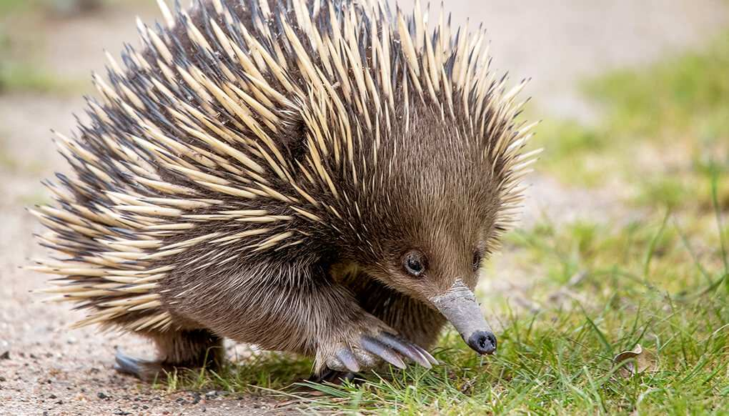 Top 10 Spiny Animals In The World