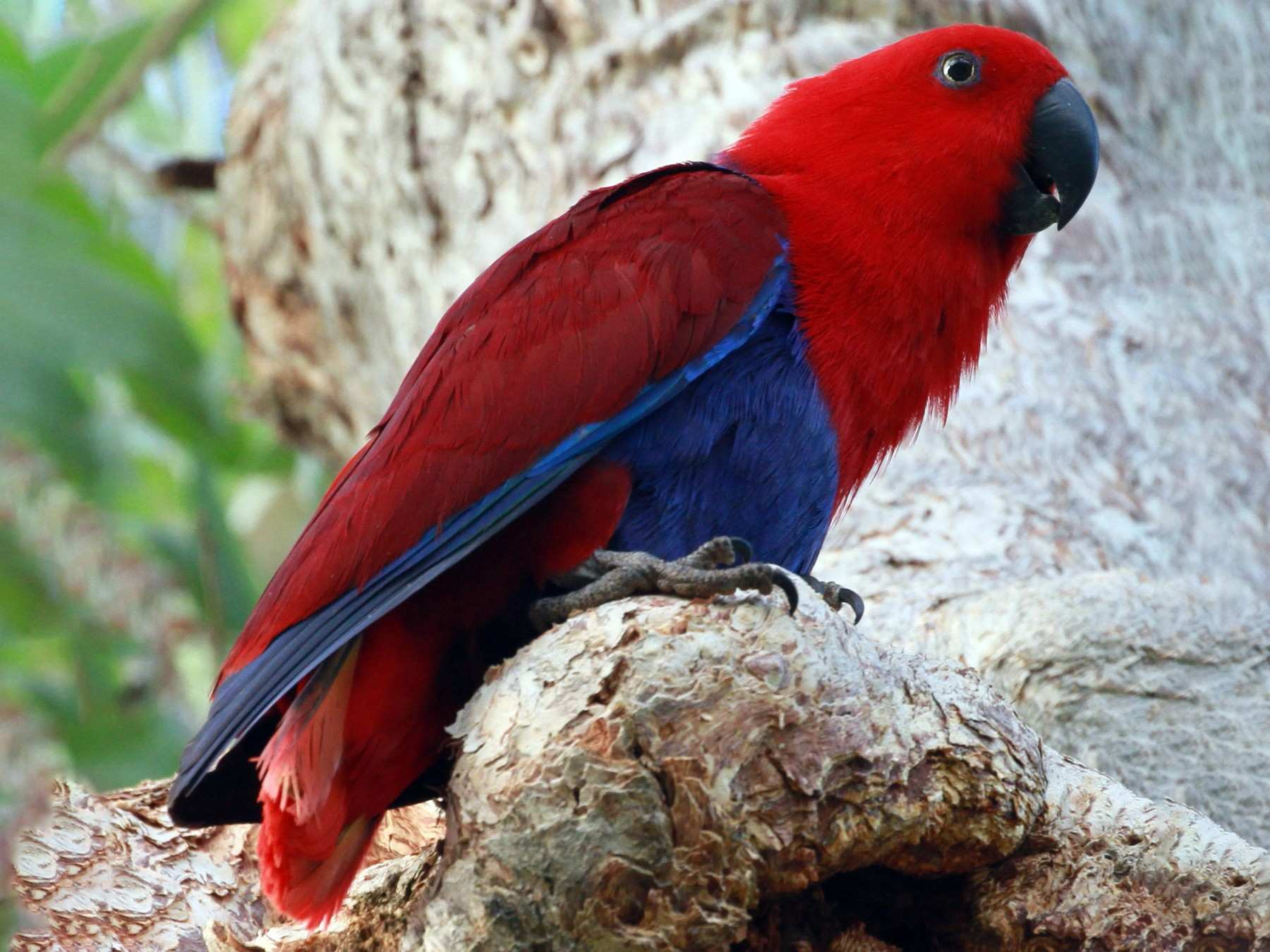 Top 10 Smart Talking Birds In The World