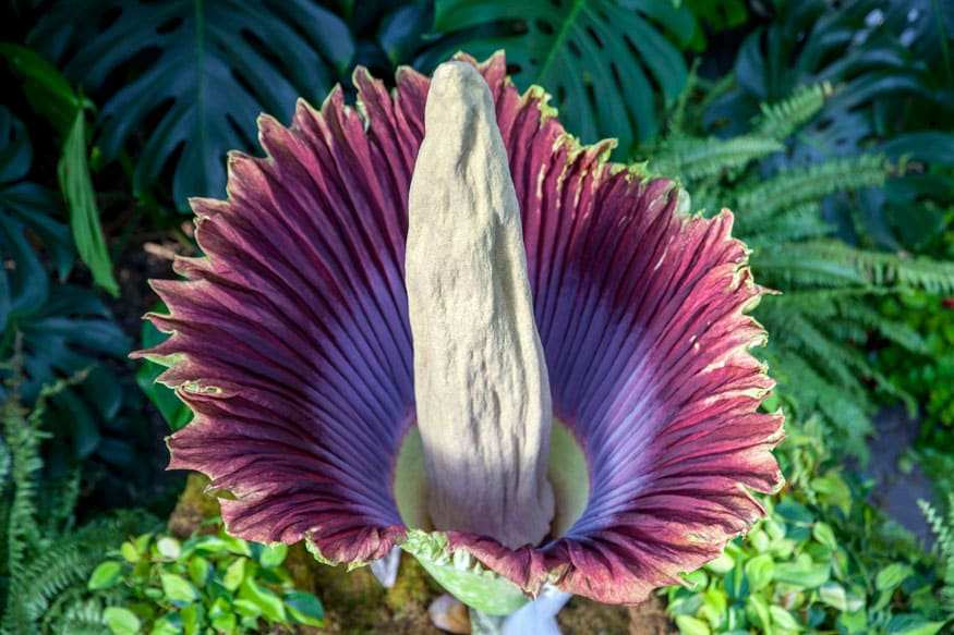 Top 10 Strangest Plants In The World