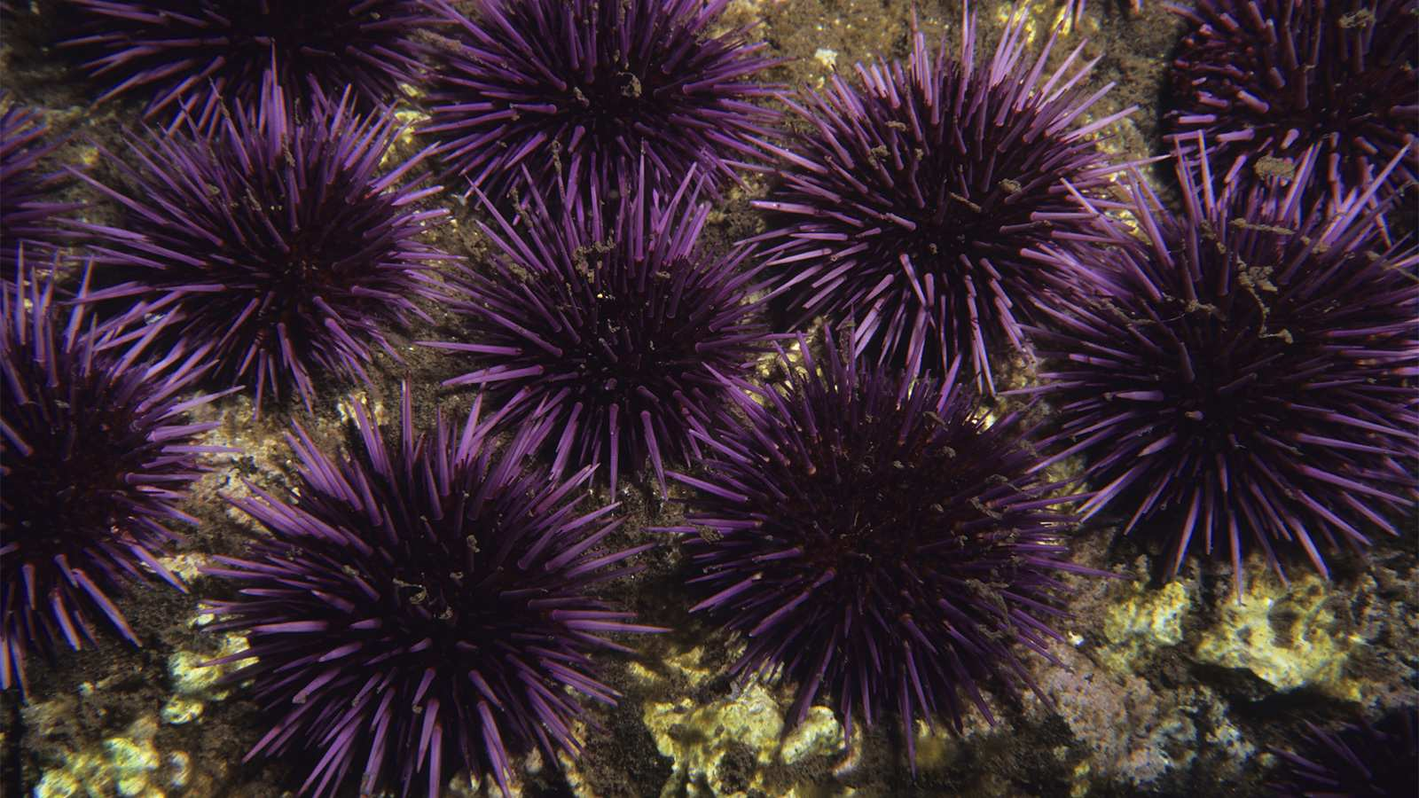 Top 10 Spiny Animals