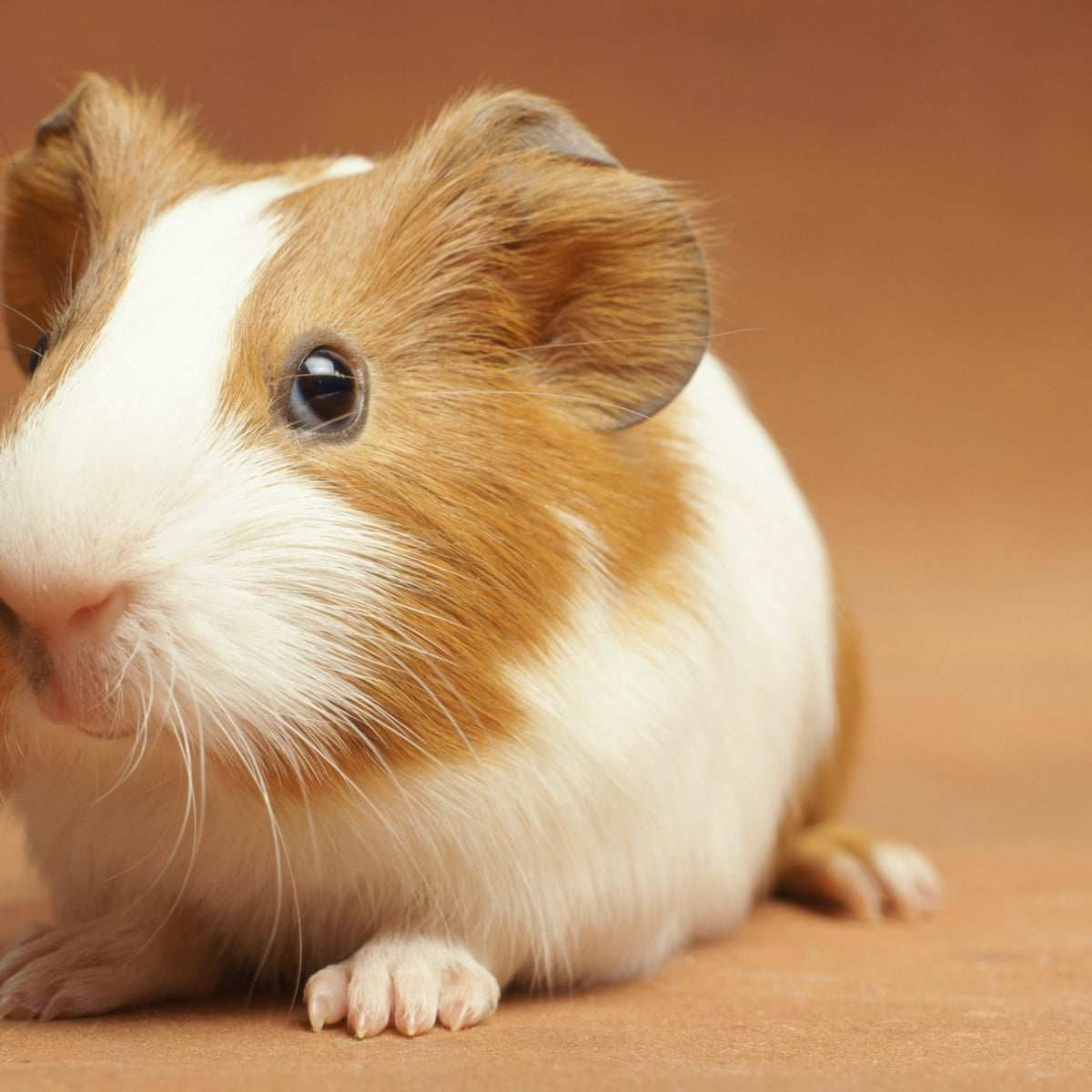 Top 15 Shortest living Animals In The World