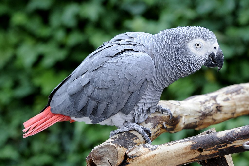 10 Most Beautiful Parrots In The World