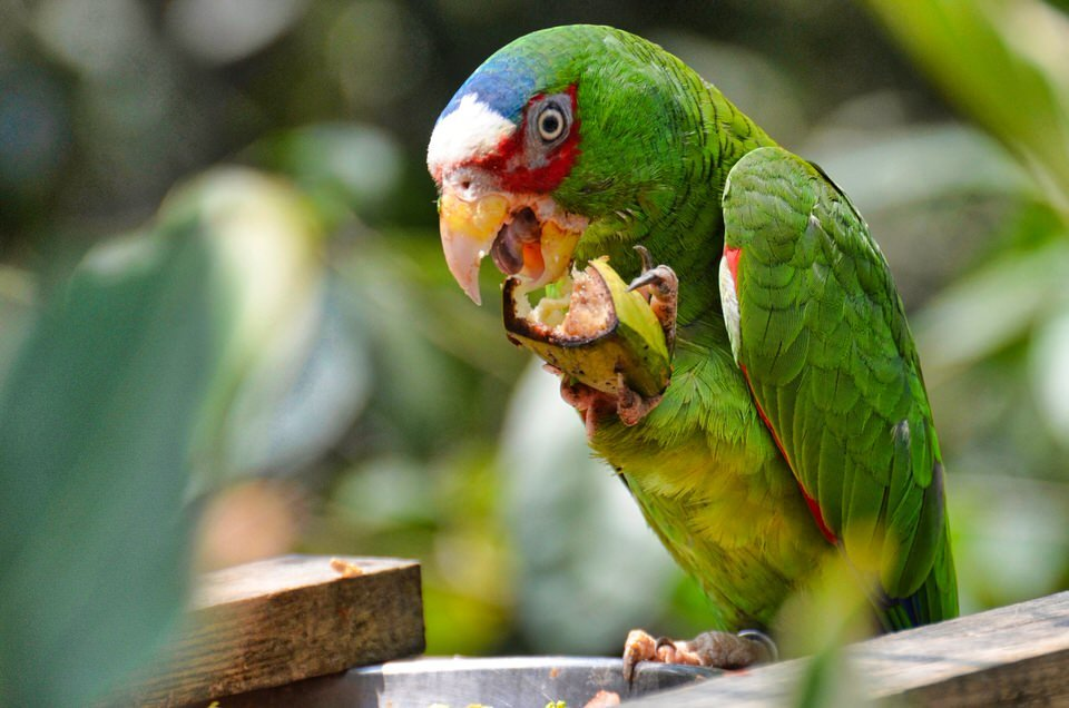 Parrots In The World