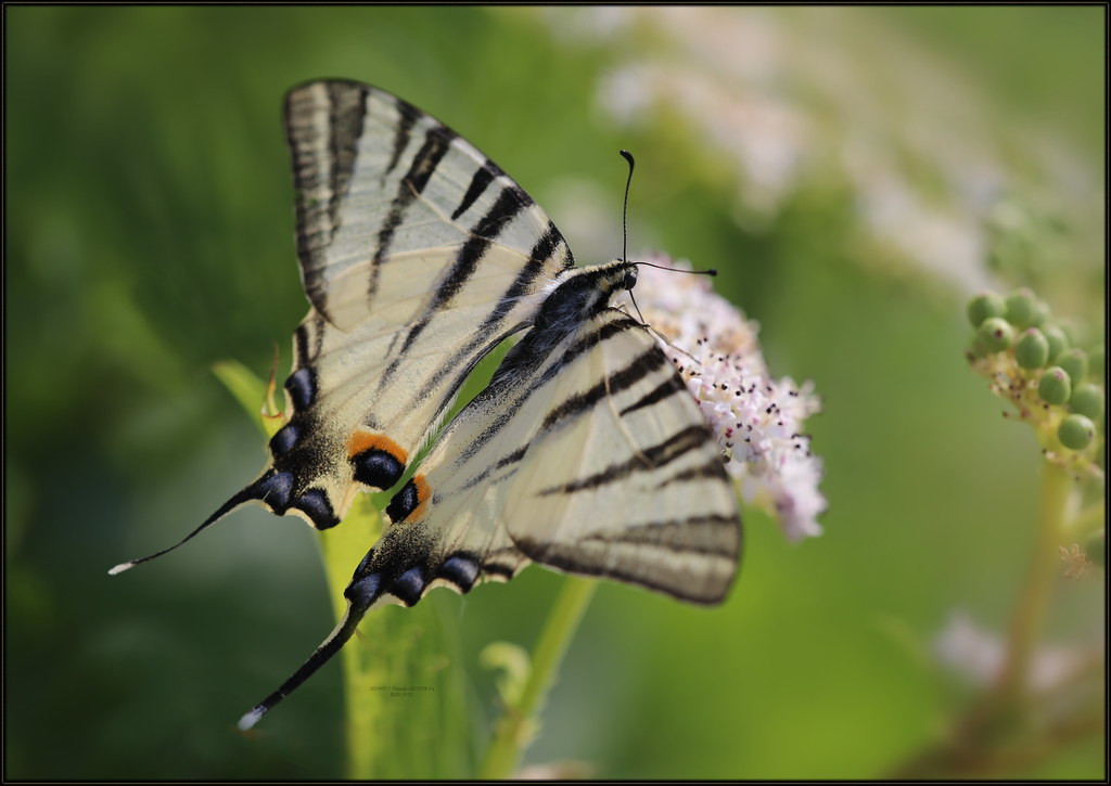 Top 15 Smallest Butterfly