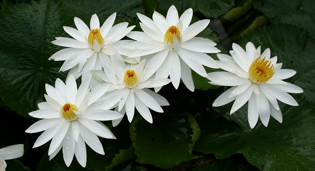 Most Beautiful Flowers that Bloom only at Night