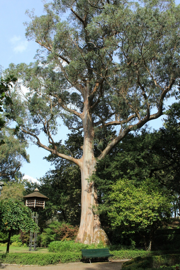 Neeminah Loggorale Meena Biggest Tree