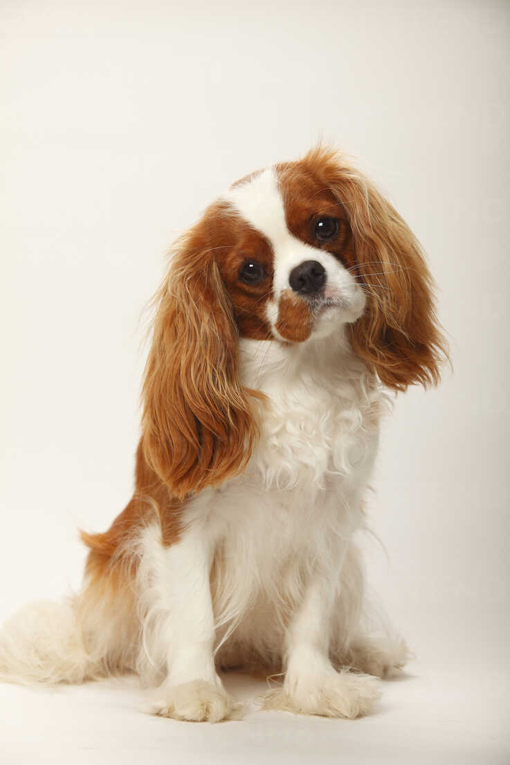 15 Best Dogs for Apartment Living