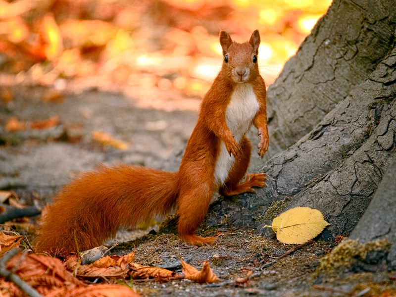 Red Squirrel Cutest Animals in The World