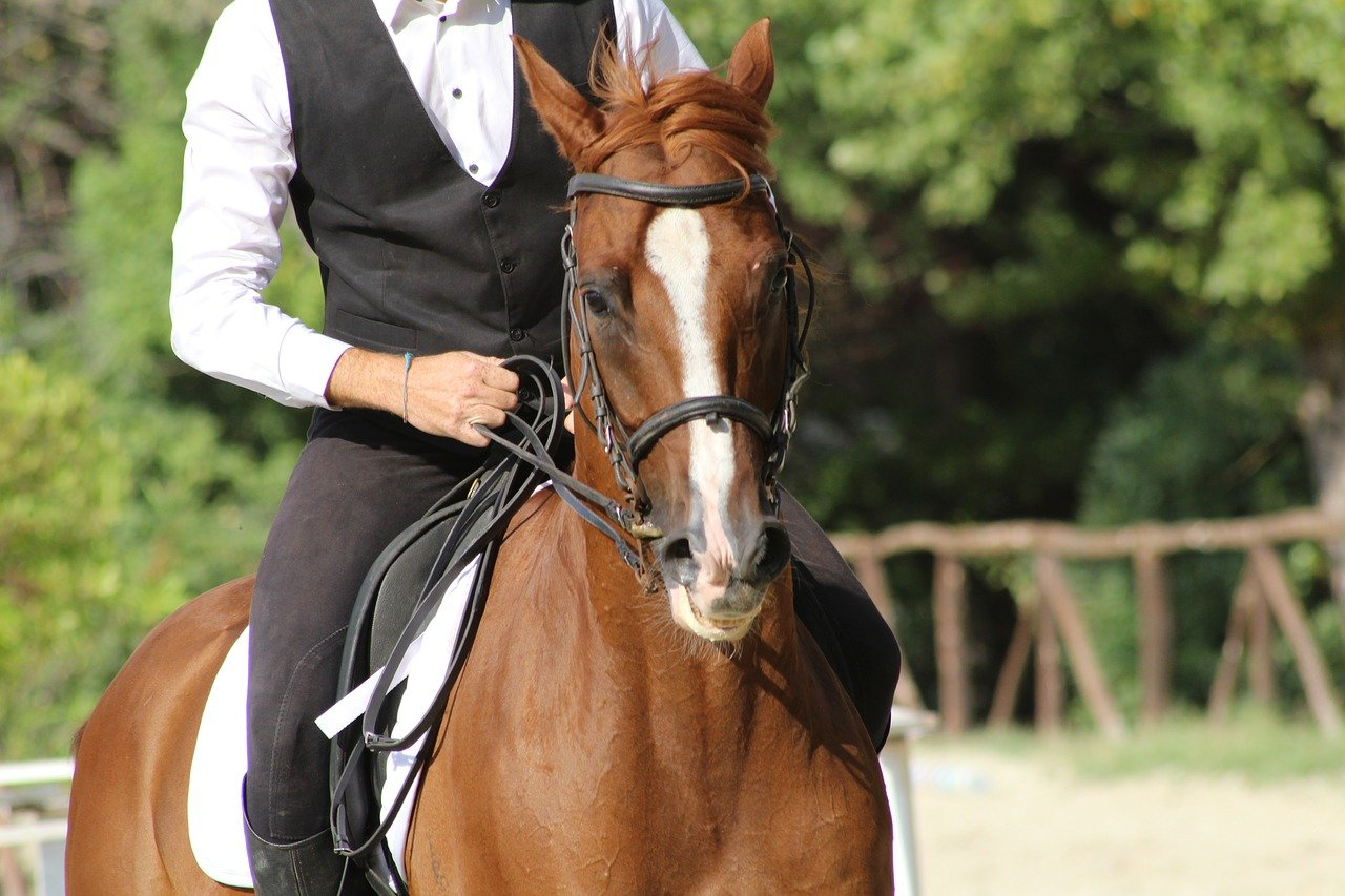 Dutch Warmblood Most Expensive Horse breed