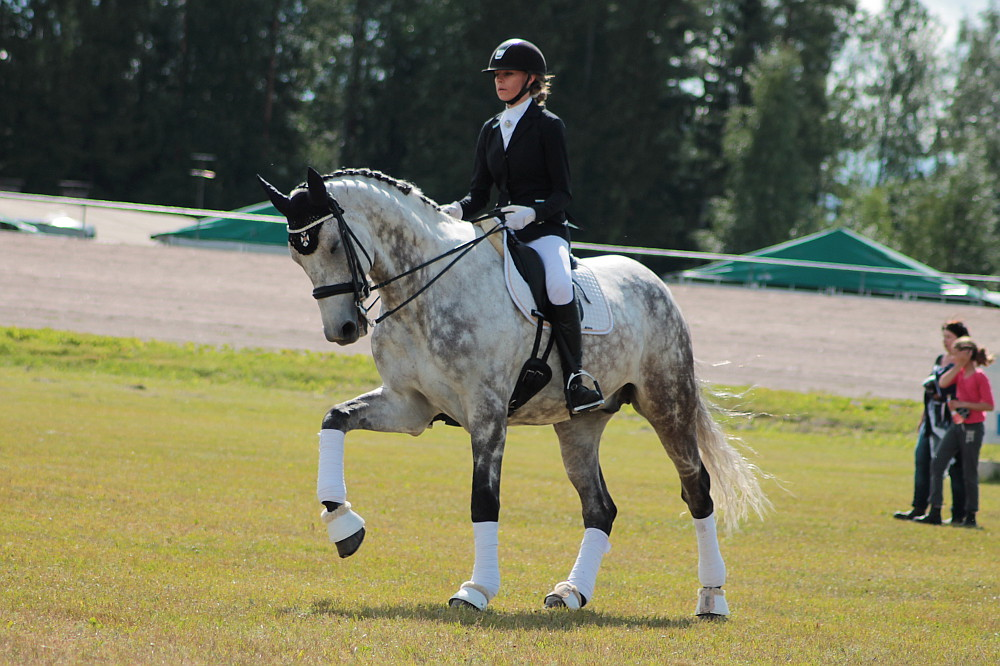 Holsteiner Most Expensive Horse breed