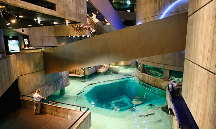 Maryland's National Aquarium Located in Maryland's Baltimore Best Aquariums In The World